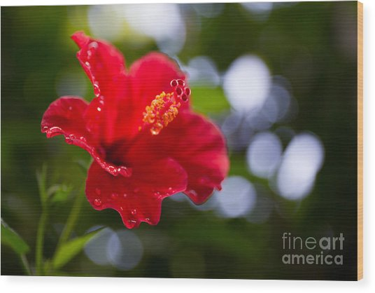 The Hibiscus Flower Close Up Wood Print by Chayatorn Laorattanavech