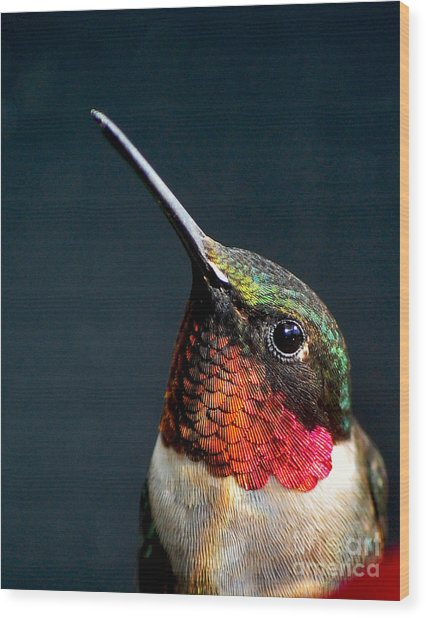 The Jeweled Beauty Of A Hummingbird Wood Print