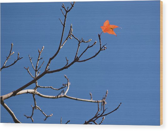 The Last Leaf During Fall Wood Print by By Ken Ilio