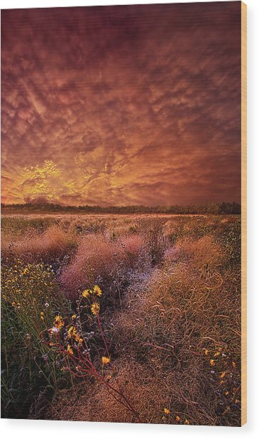 Wood Print featuring the photograph The Light So Softly Spoken by Phil Koch