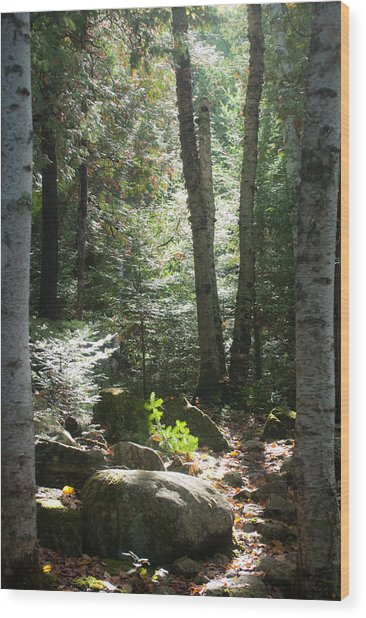 The Living Forest Wood Print
