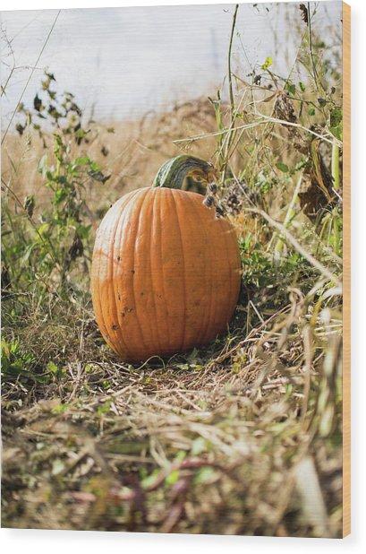 The Lone Pumpkin Wood Print