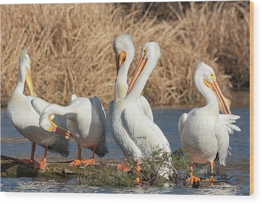 The Pelican Gang Wood Print