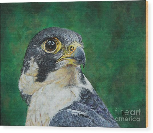 The Proud Peregrine....fastest Creature On The Planet Wood Print