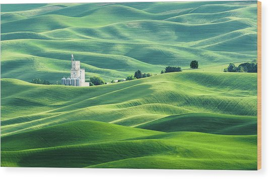 The Rolling Fields Of Palouse Wood Print