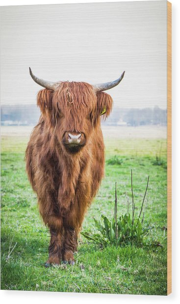 Wood Print featuring the photograph The Scottish Highlander by Anjo Ten Kate