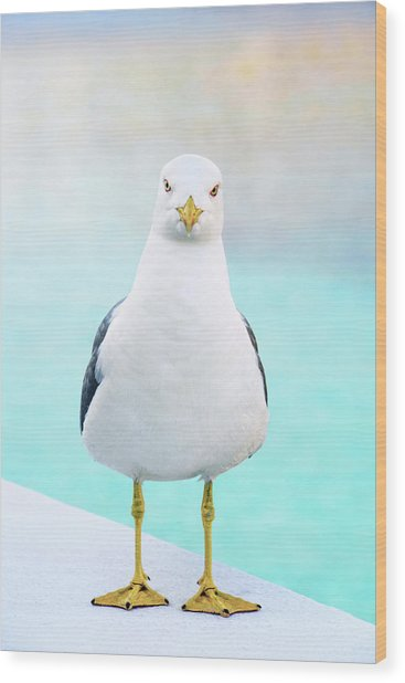 The Stare Of The Seagull Wood Print