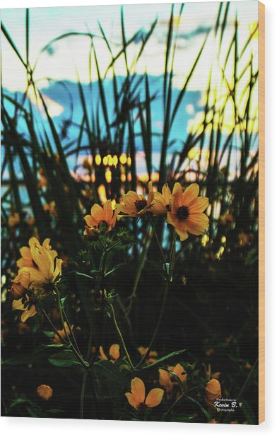 The Sunflower's Sunset Wood Print