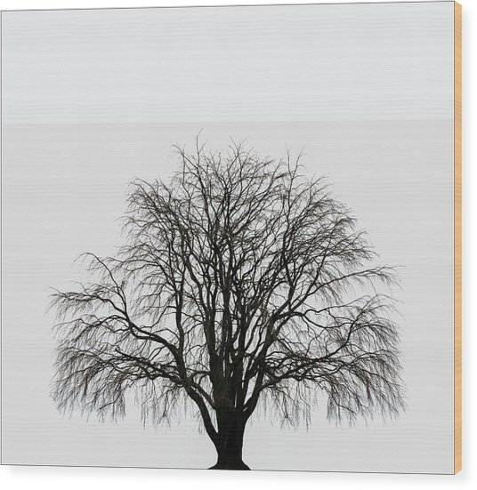 Wood Print featuring the photograph The Tree By The Side Of The Road by Jim Dollar