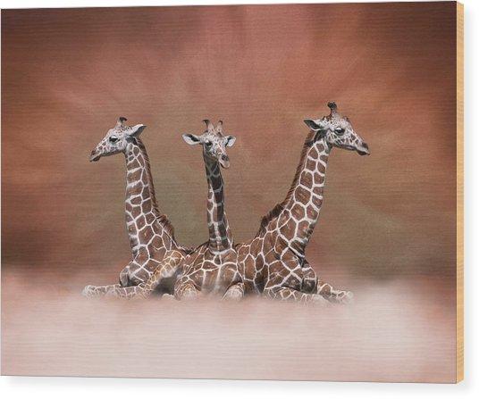 The Watchers - Three Giraffes Wood Print
