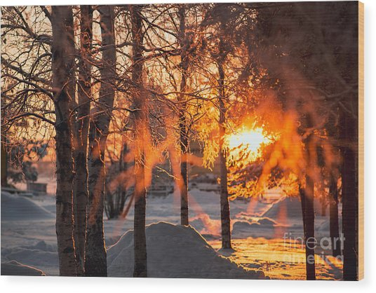 The Winter Park At Sunset. Hoarfrost On Wood Print
