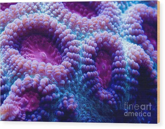 This Is A Macro Photograph Of A Purple Wood Print