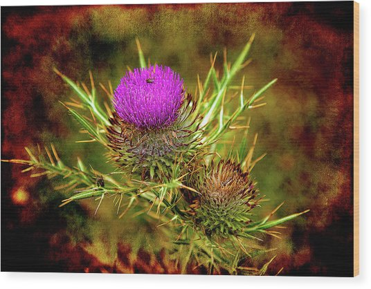 Wood Print featuring the photograph Thistle Life by Milena Ilieva