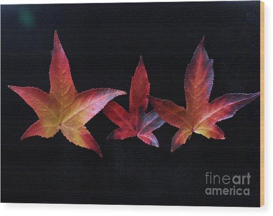 Three Amigos Or Amigas Wood Print