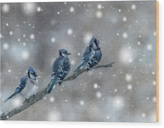 Three Blue Jays In The Snow Wood Print