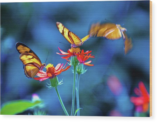 Three Butterflies Wood Print by By Ken Ilio