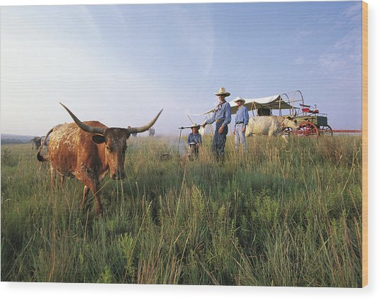 Three Cowboys Standing By Texas Wood Print by Sylvain Grandadam