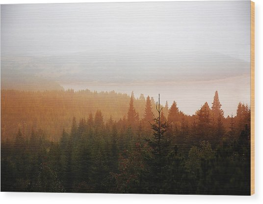 Wood Print featuring the photograph Through The Mist by Milena Ilieva