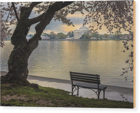 Tidal Basin With Cherry Blossoms And Wood Print by Drnadig