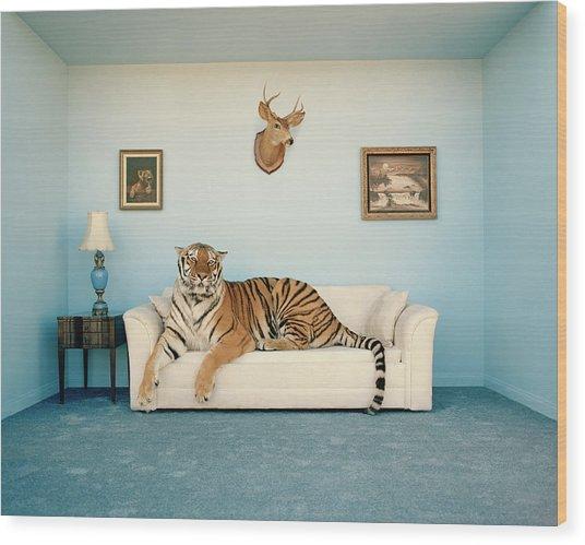 Tiger On Sofa Under Animal Trophy Wood Print