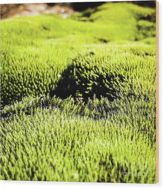 Wood Print featuring the photograph Tiny Forest 2 by Atousa Raissyan