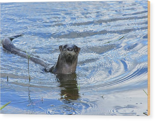 To My Otter Amazement Wood Print