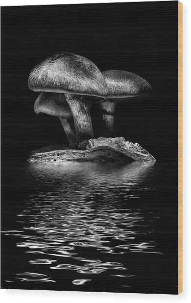 Toadstools On A Toronto Trail Reflection 3 Wood Print