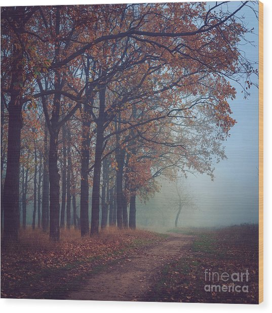 Toned Picture Of Sad And Mystery Autumn Wood Print