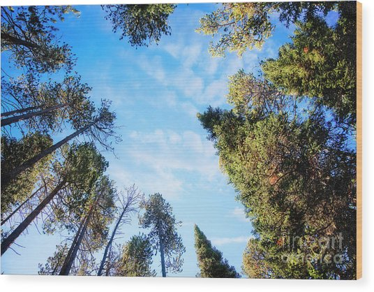 Wood Print featuring the photograph Towering Pines by Scott Kemper
