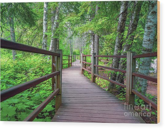 Trail At Gooseberry Falls Wood Print