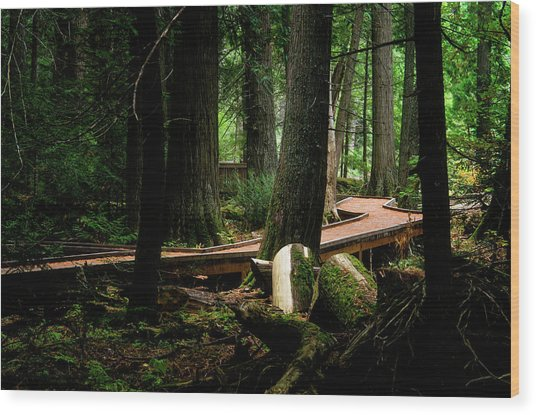 Trail Of The Ceders Wood Print