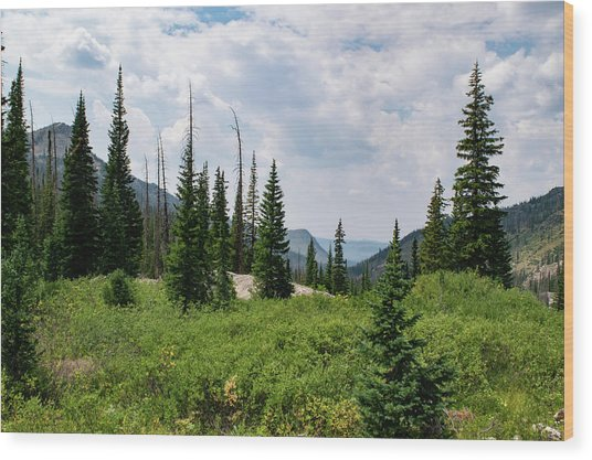 Trail To Gilpin Lake Wood Print