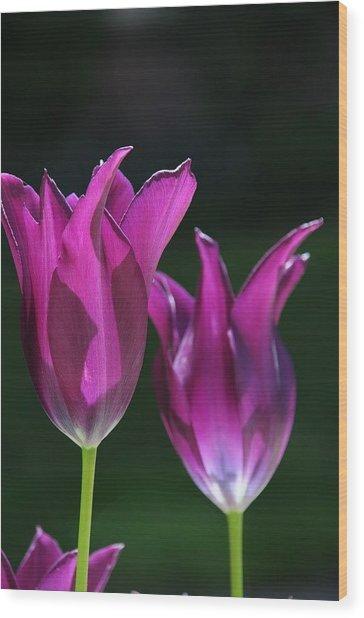 Translucent Tulips Wood Print
