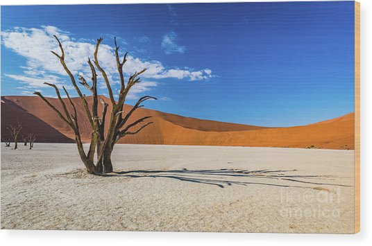 Tree And Shadow In Deadvlei, Namibia Wood Print