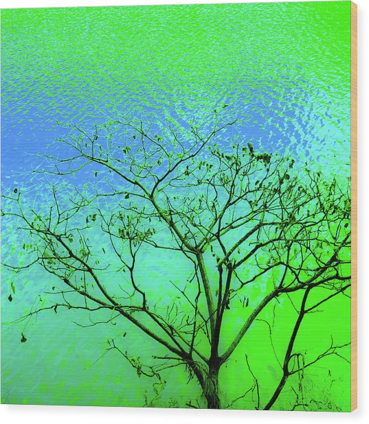 Tree And Water 3 Wood Print