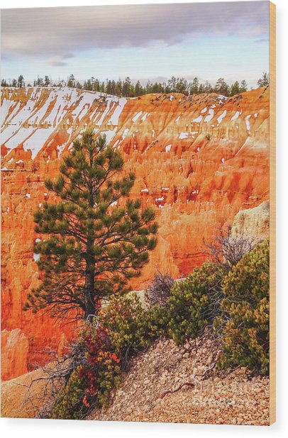 Tree In Bryce Canyon Wood Print by Bob Lentz