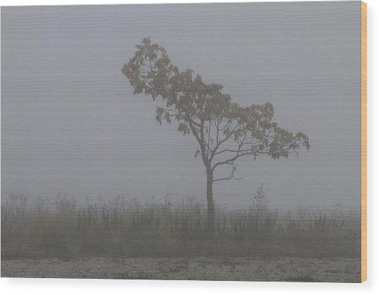Tree In Fog Wood Print
