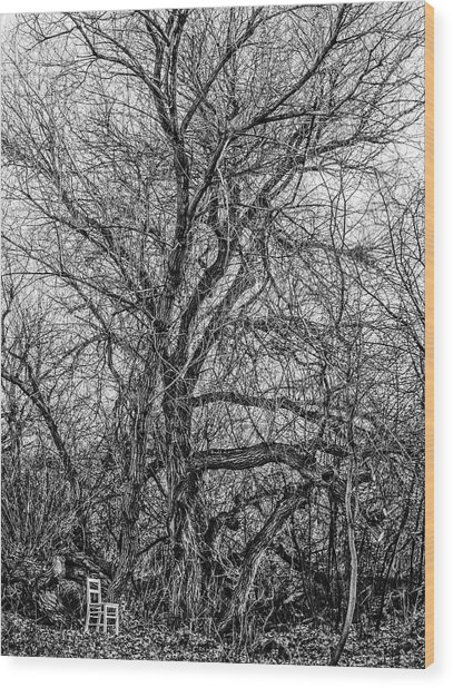 Tree In Nature Park / The Chair Project Wood Print