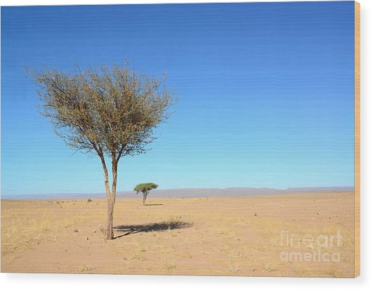 Tree In Sahara Desert In Morocco Near Wood Print