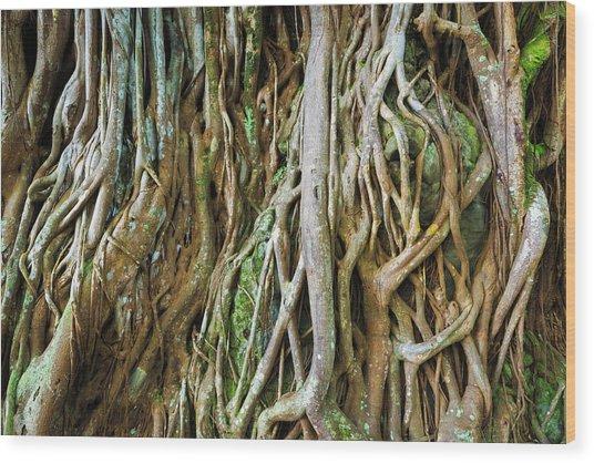 Tree Roots, Onomea Bay, Hamakua Coast Wood Print by Russ Bishop