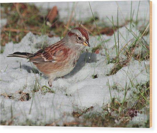 Tree Sparrow In Snow Wood Print