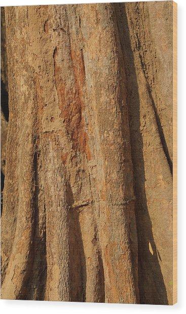 Tree Trunk And Bark Of Chambak Wood Print