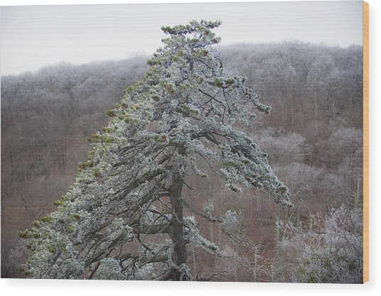 Tree With Hoarfrost Wood Print