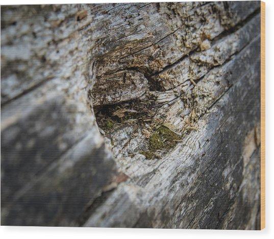 Tree Wood Wood Print