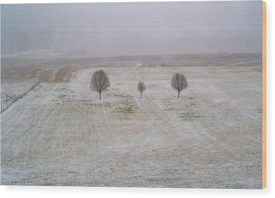Trees In Snowstorm Wood Print