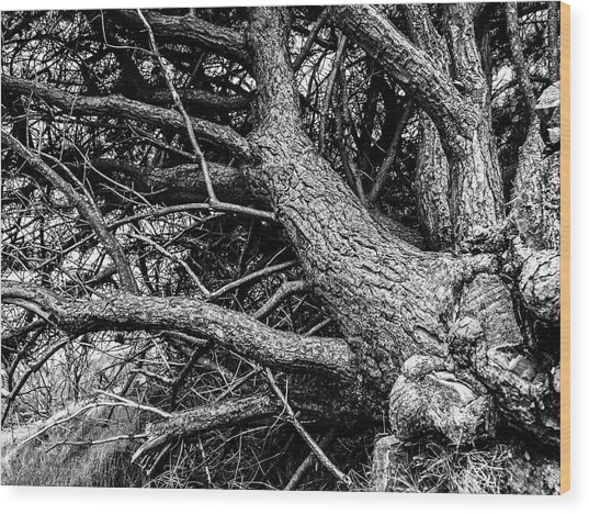 Wood Print featuring the photograph Trees, Leaning by Edward Lee