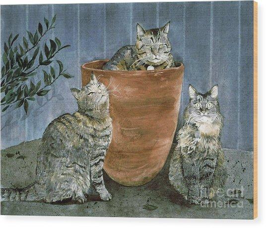 Tres Gatos Wood Print