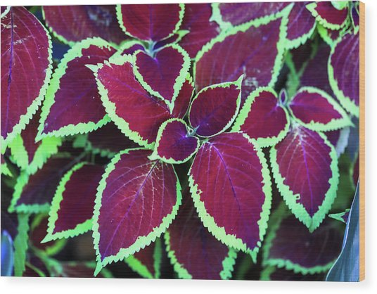 Tropical Leaves Wood Print