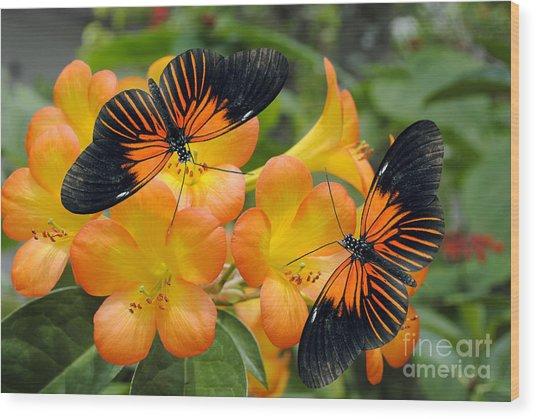 Tropical Rhododendron Simbu Sunset Wood Print