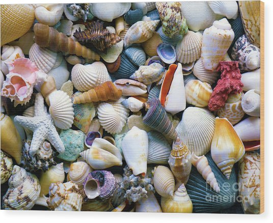 Wood Print featuring the photograph Tropical Treasure Seashells A91218 by Mas Art Studio